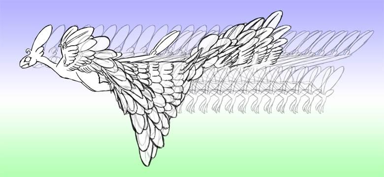 羽ばたき2-16