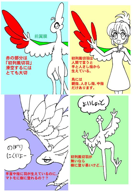 鳥の「腕」